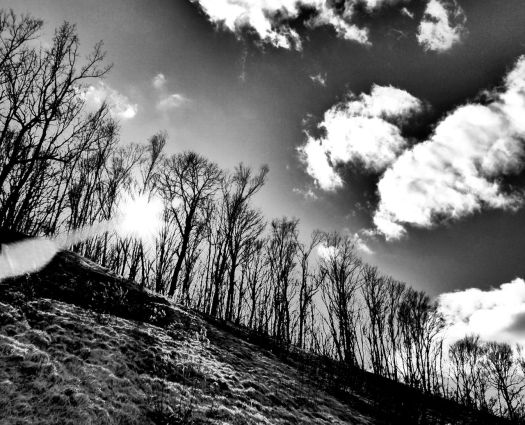 bw trees sun hill clouds