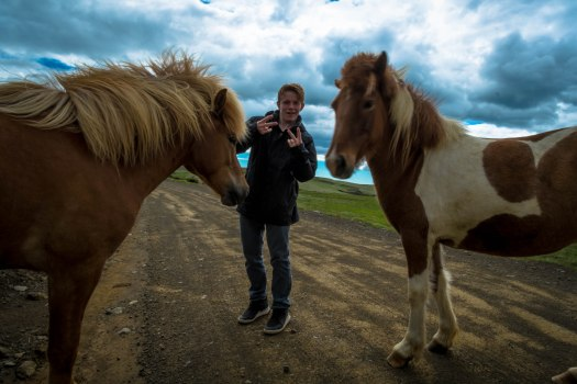 Iceland post 2 horses Justin
