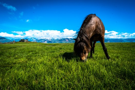 Iceland post green beauty horse