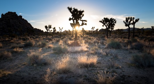 Joshua Tree sunrise 3